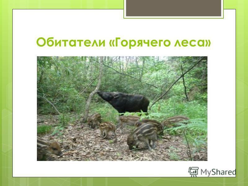Обитатели «Горячего леса»