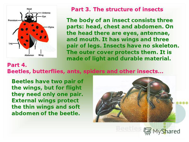 Part 3. The structure of insects The body of an insect consists three parts: head, chest and abdomen. On the head there are eyes, antennae, and mouth. It has wings and three pair of legs. Insects have no skeleton. The outer cover protects them. It is