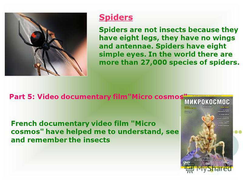 Spiders are not insects because they have eight legs, they have no wings and antennae. Spiders have eight simple eyes. In the world there are more than 27,000 species of spiders. Part 5: Video documentary film