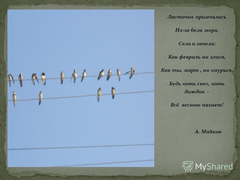 Ласточка примчалась Из-за бела моря, Села и запела: Как февраль ни злится, Как ты, март, ни хмурься, Будь хоть снег, хоть дождик – Всё весною пахнет! А. Майков