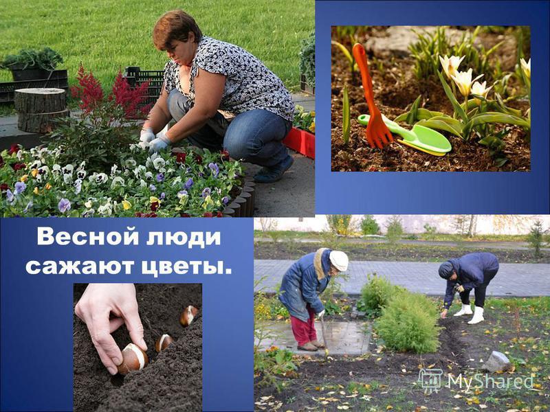 Весной люди сажают цветы.