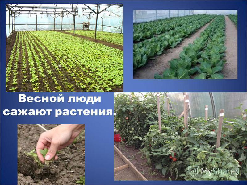 Весной люди сажают растения.