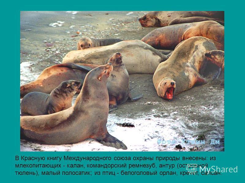 В Красную книгу Международного союза охраны природы внесены: из млекопитающих - калан, командорский ремнезуб, натур (островной тюлень), малый полосатик; из птиц - белоголовый орлан, кречет, сапсан.