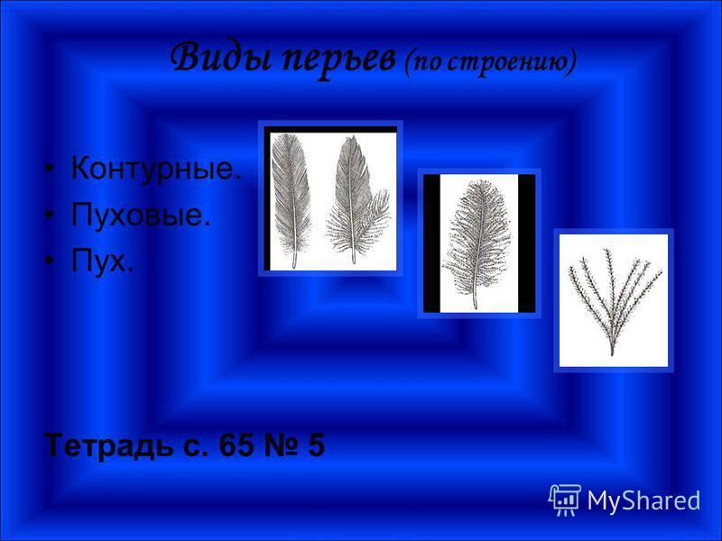 Виды перьев (по строению) Контурные. Пуховые. Пух. Тетрадь с. 65 5