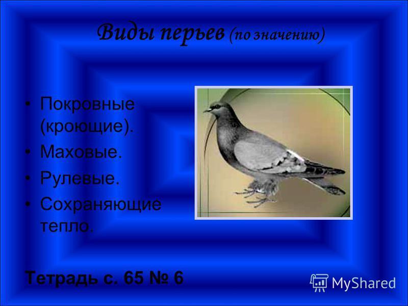 Виды перьев (по значению) Покровные (кроющие). Маховые. Рулевые. Сохраняющие тепло. Тетрадь с. 65 6