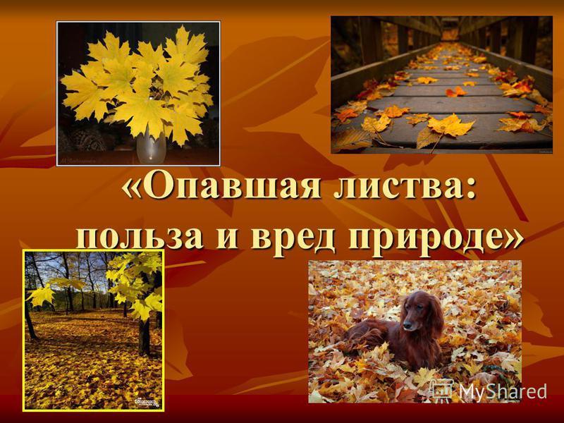 «Опавшая листва: польза и вред природе»