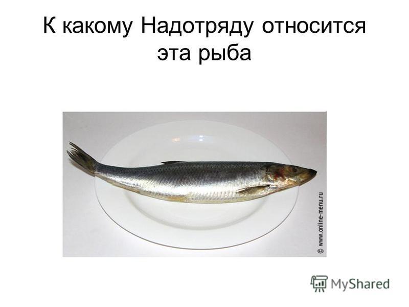 К какому Надотряду относится эта рыба