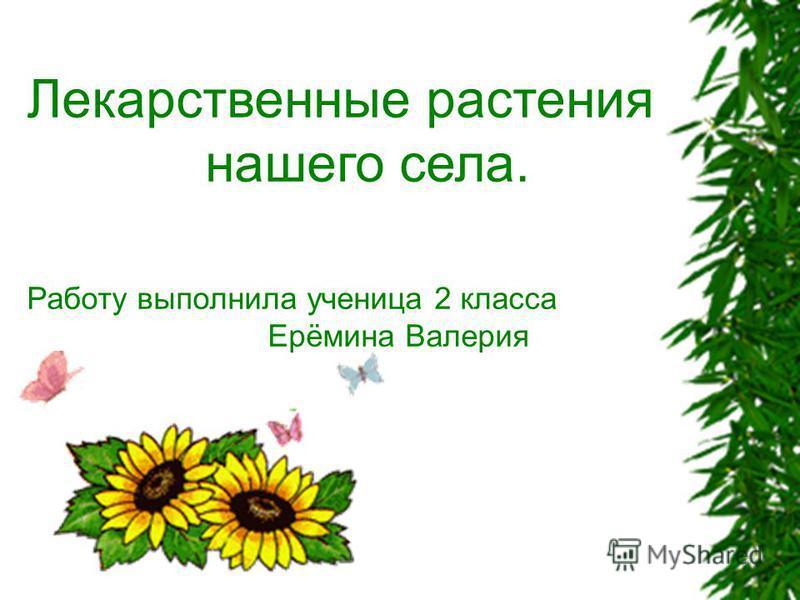 Лекарственные растения нашего села. Работу выполнила ученица 2 класса Ерёмина Валерия