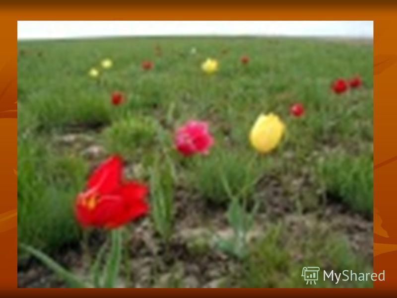 ЭФЕМЕРЫ (греч. ephemeros однодневный, недолговечный) однолетние травы с коротким жизненным циклом (до 1,5 месяцев), завершающимся образованием семян (крупка весенняя, виды бурачка и другие). Распространены в пустынях, полупустынях и в степях. В отлич