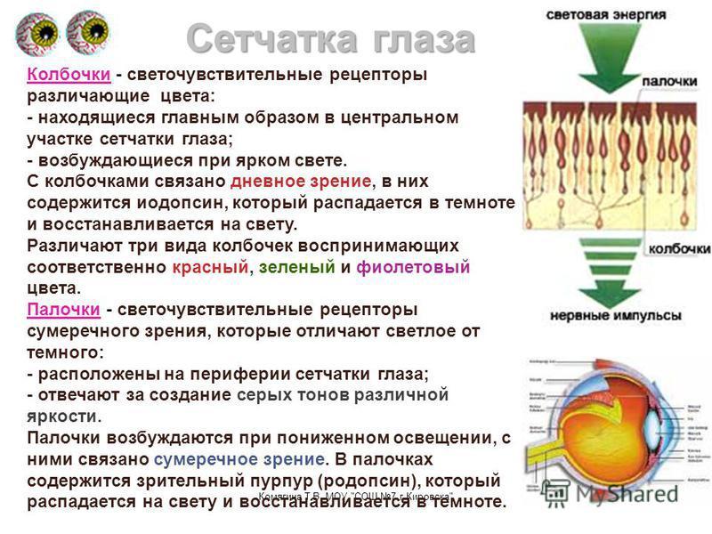 Комягина Т.В. МОУ