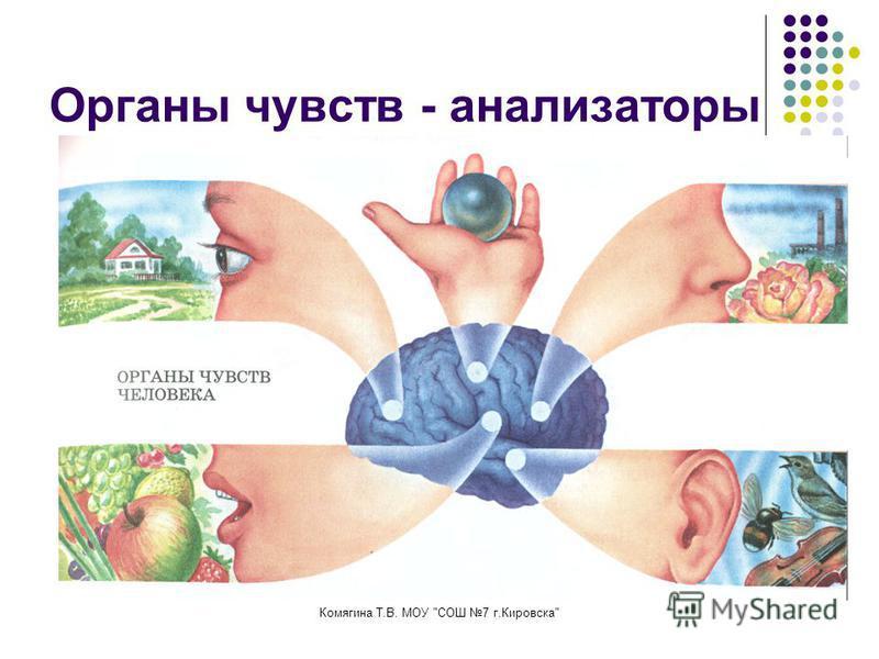 Комягина Т.В. МОУ СОШ 7 г.Кировска Органы чувств - анализаторы
