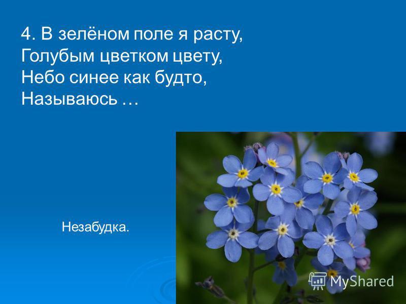 4. В зелёном поле я расту, Голубым цветком цвету, Небо синее как будто, Называюсь … Незабудка.