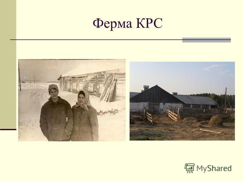Ферма КРС