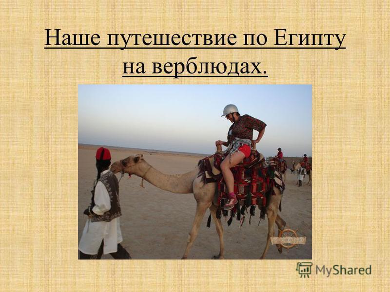 Наше путешествие по Египту на верблюдах.