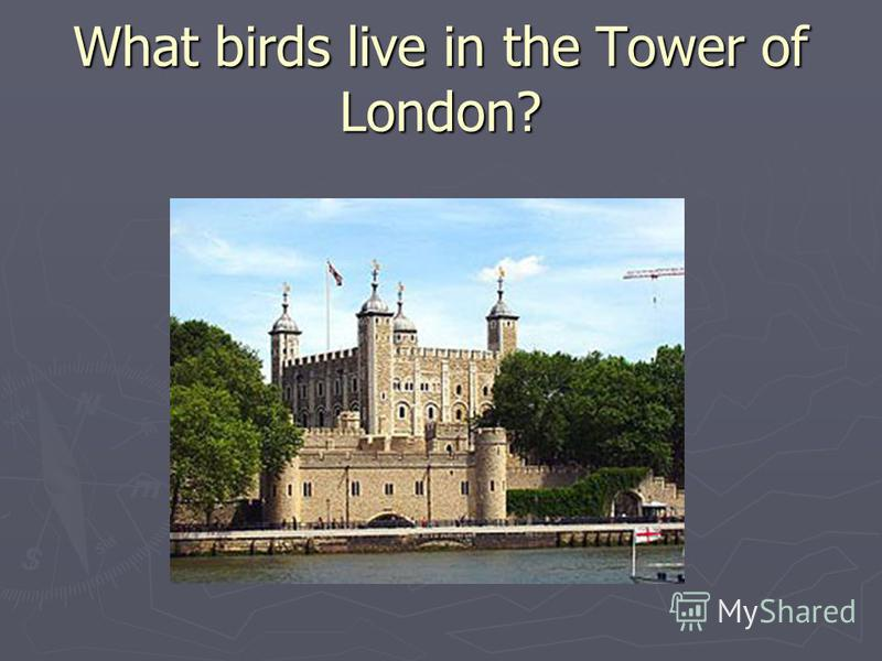 What birds live in the Tower of London?