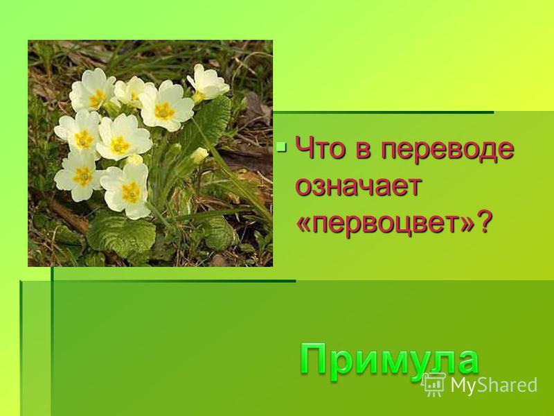 Что в переводе означает «первоцвет»? Что в переводе означает «первоцвет»?