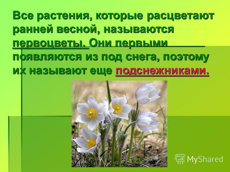Все растения, которые расцветают ранней весной, называются первоцветы. Они первыми появляются из под снега, поэтому их называют еще подснежниками.