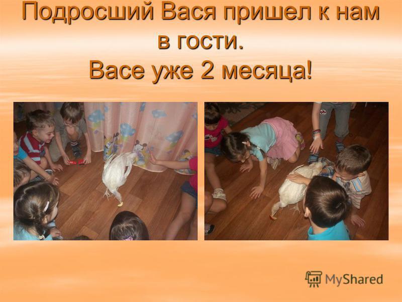Подросший Вася пришел к нам в гости. Васе уже 2 месяца!