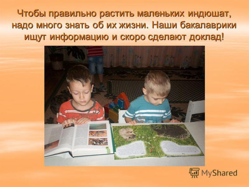 Чтобы правильно растить маленьких индюшат, надо много знать об их жизни. Наши бакалаврики ищут информацию и скоро сделают доклад!