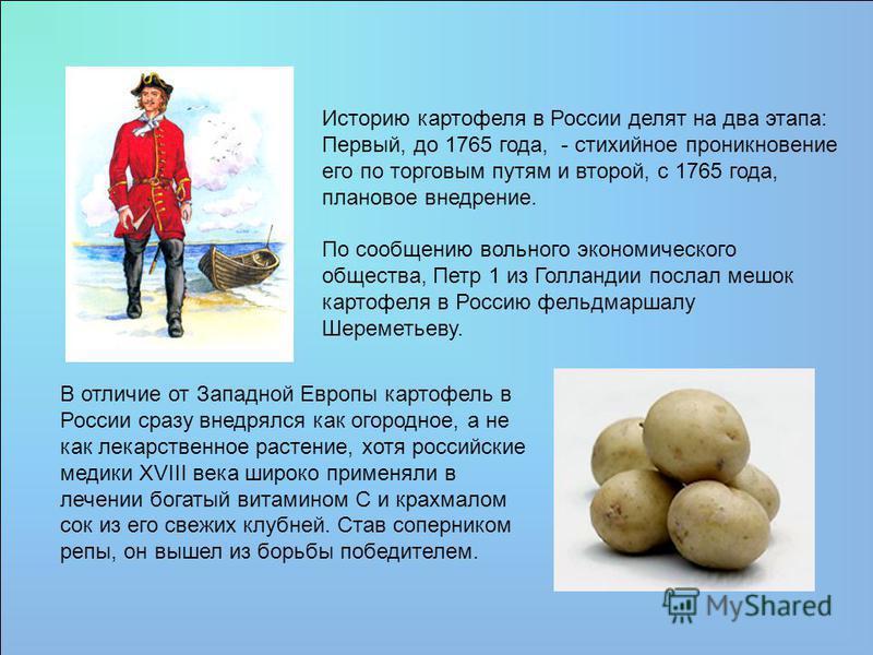 Историю картофеля в России делят на два этапа: Первый, до 1765 года, - стихийное проникновение его по торговым путям и второй, с 1765 года, плановое внедрение. По сообщению вольного экономического общества, Петр 1 из Голландии послал мешок картофеля