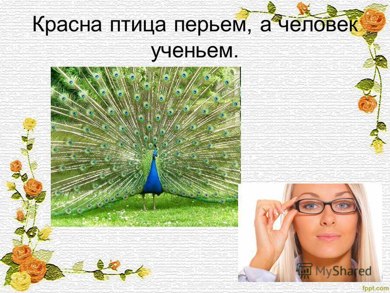 Красна птица перьем, а человек ученьем.