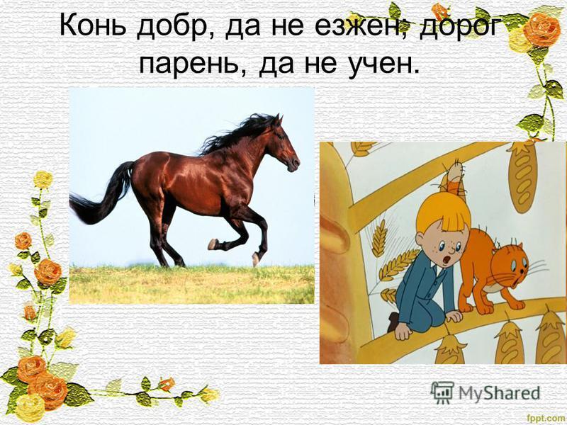 Конь добр, да не езжен; дорог парень, да не учен.