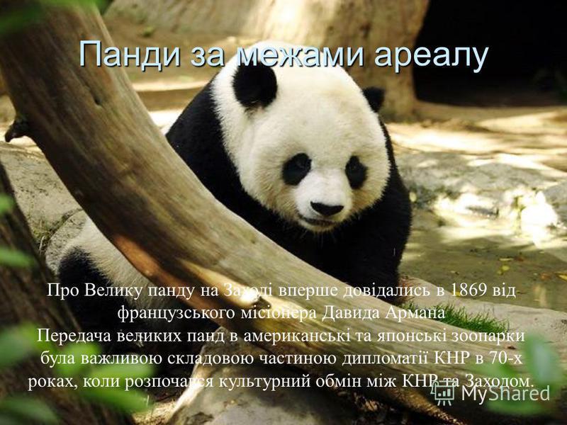 Панди за межами ареалу Про Велику панду на Заході вперше довідались в 1869 від французського місіонера Давида Армана Передача великих панд в американські та японські зоопарки була важливою складовою частиною дипломатії КНР в 70-х роках, коли розпочав