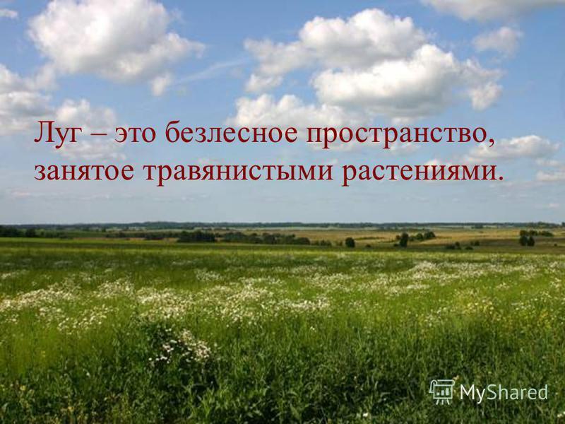 Луг – это безлесное пространство, занятое травянистыми растениями.
