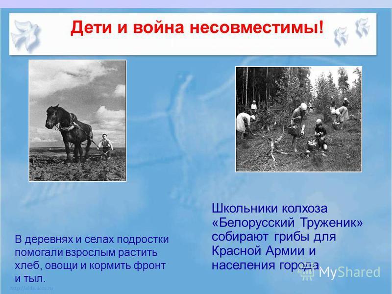 Дети и война несовместимы! Школьники колхоза «Белорусский Труженик» собирают грибы для Красной Армии и населения города. В деревнях и селах подростки помогали взрослым растить хлеб, овощи и кормить фронт и тыл.