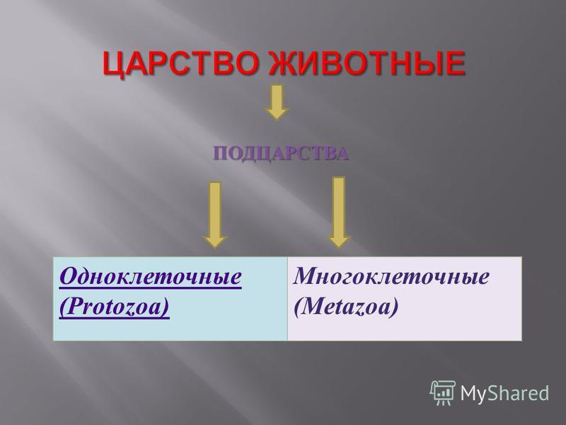ПОДЦАРСТВА Одноклеточные (Protozoa) Многоклеточные (Metazoa)