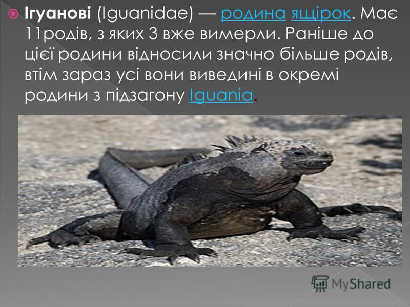 Ігуанові (Iguanidae) родина ящірок. Має 11родів, з яких 3 вже вимерли. Раніше до цієї родини відносили значно більше родів, втім зараз усі вони виведині в окремі родини з підзагону Iguania.родинаящірокIguania