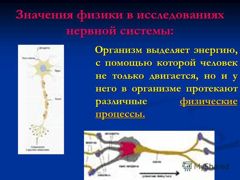 Значения физики в исследованиях нервной системы: Организм выделяет энергию, с помощью которой человек не только двигается, но и у него в организме протекают различные физические процессы. Организм выделяет энергию, с помощью которой человек не только