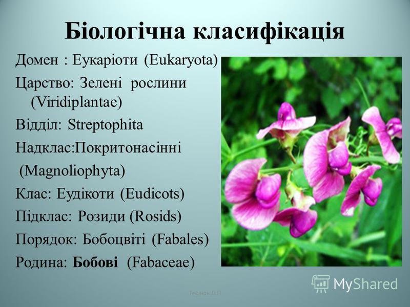Біологічна класифікація Домен : Еукаріоти (Eukaryota) Царство: Зелені рослини (Viridiplantae) Відділ: Streptophita Надклас:Покритонасінні (Magnoliophyta) Клас: Еудікоти (Eudicots) Підклас: Розиди (Rosids) Порядок: Бобоцвіті (Fabales) Родина: Бобові (