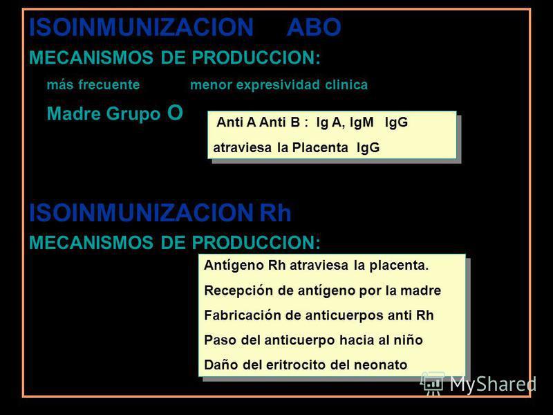 ISOINMUNIZACION ABO MECANISMOS DE PRODUCCION: más frecuente menor expresividad clinica Madre Grupo O ISOINMUNIZACION Rh MECANISMOS DE PRODUCCION: Anti A Anti B : Ig A, IgM IgG atraviesa la Placenta IgG Anti A Anti B : Ig A, IgM IgG atraviesa la Place