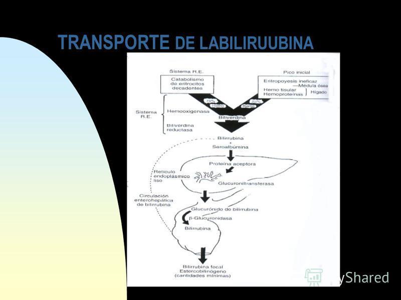 TRANSPORTE DE LABILIRUUBINA