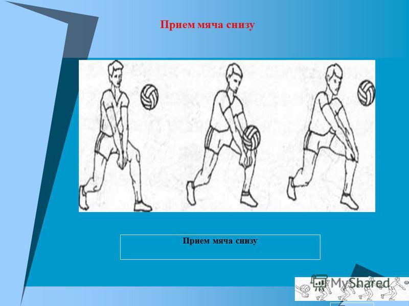 Соединение кистей рук при приеме снизу Прием мяча снизу