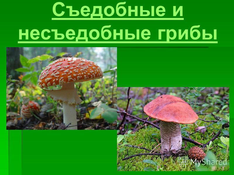 Съедобные и несъедобные грибы