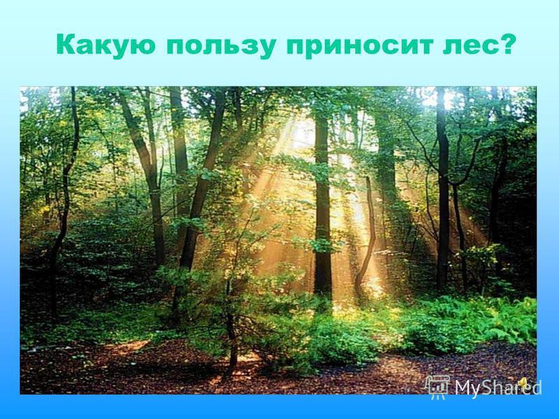 Какую пользу приносит лес?