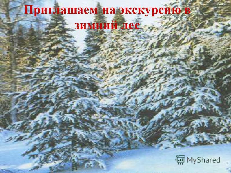 Приглашаем на экскурсию в зимний лес