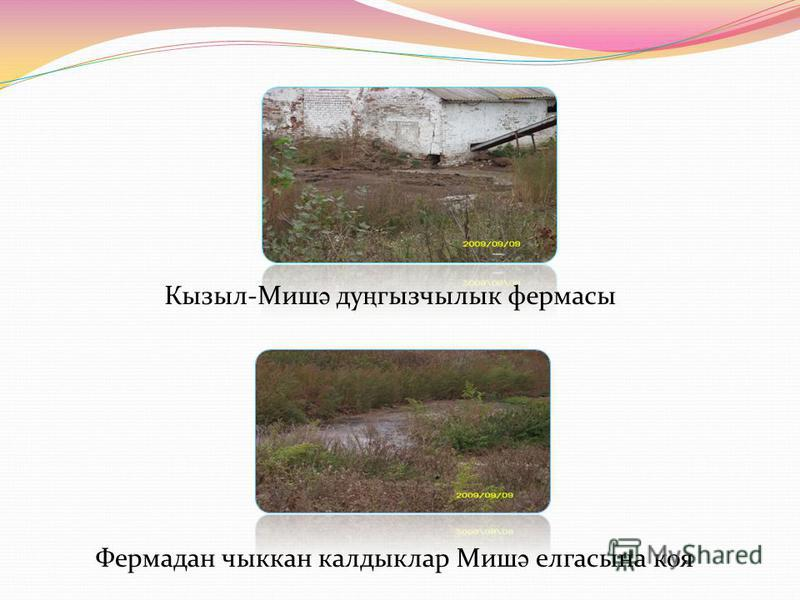 Кызыл-Миш ә ду ң гызчылык фермасы Фермадан чыккан калдыклар Миш ә елгасына коя