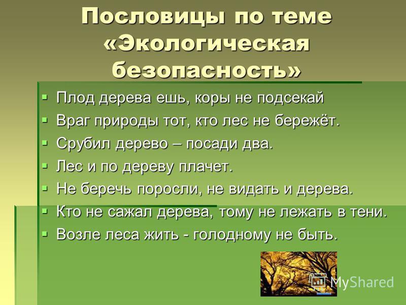 Пословицы по теме «Экологическая безопасность» Плод дерева ешь, коры не подсекай Плод дерева ешь, коры не подсекай Враг природы тот, кто лес не бережёт. Враг природы тот, кто лес не бережёт. Срубил дерево – посади два. Срубил дерево – посади два. Лес