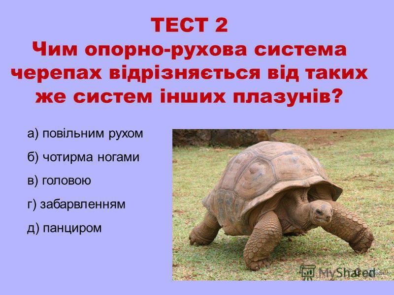 ТЕСТ 2 Чим опорно-рухова система черепах відрізняється від таких же систем інших плазунів? а) повільним рухом б) чотирма ногами в) головою г) забарвленням д) панциром