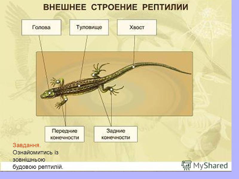 Завдання. Ознайомитись із зовнішньою будовою рептилій.