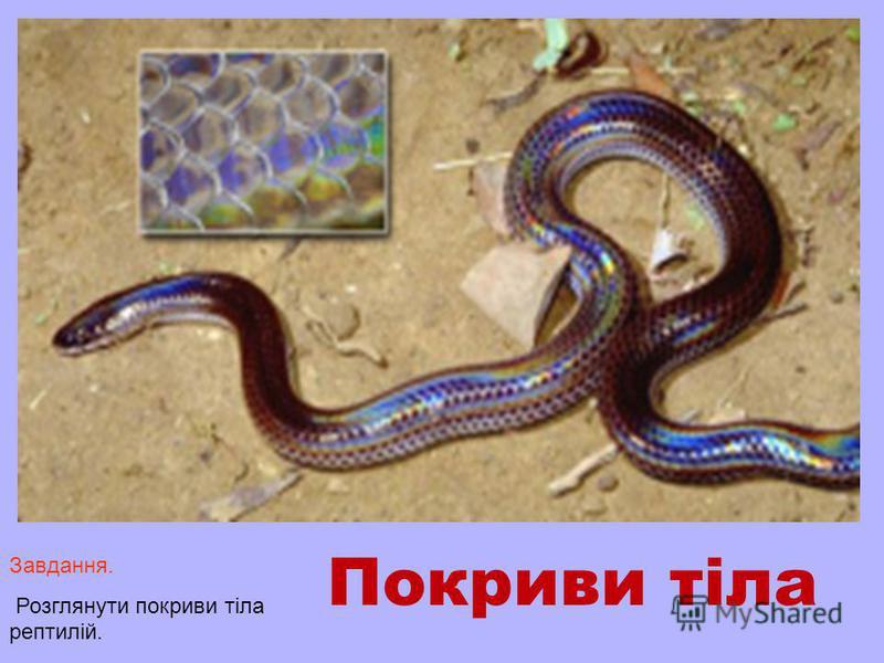 Покриви тіла Завдання. Розглянути покриви тіла рептилій.
