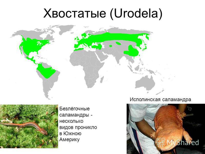 Забота о потомстве у яйцекладущей Boulengerula taitanus из Кении «не кормящая» самка «кормящая» самка Стадии кормления Прокраска Суданом чёрным на липиды