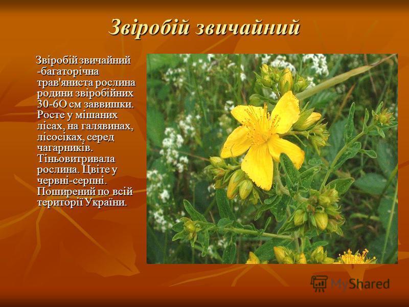 Звіробій звичайний Звіробій звичайний -багаторічна трав'яниста рослина родини звіробійних 30-6О см заввишки. Росте у мішаних лісах, на галявинах, лісосіках, серед чагарників. Тіньовитривала рослина. Цвіте у червні-серпні. Поширений по всій території