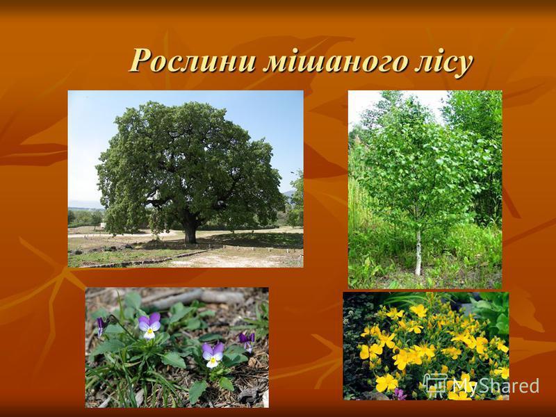 Рослини мішаного лісу