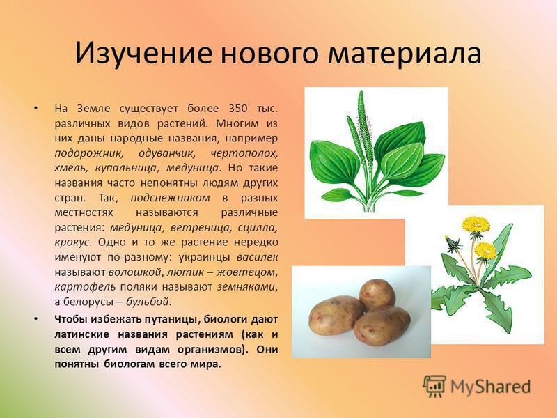 Изучение нового материала На Земле существует более 350 тыс. различных видов растений. Многим из них даны народные названия, например подорожник, одуванчик, чертополох, хмель, купальница, медуница. Но такие названия часто непонятны людям других стран