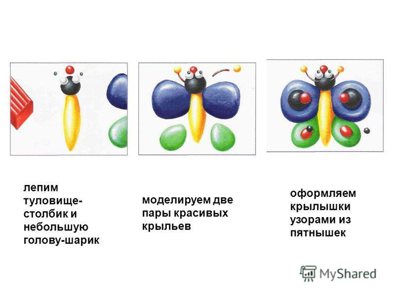 лепим туловище- столбик и небольшую голову-шарик моделируем две пары красивых крыльев оформляем крылышки узорами из пятнышек