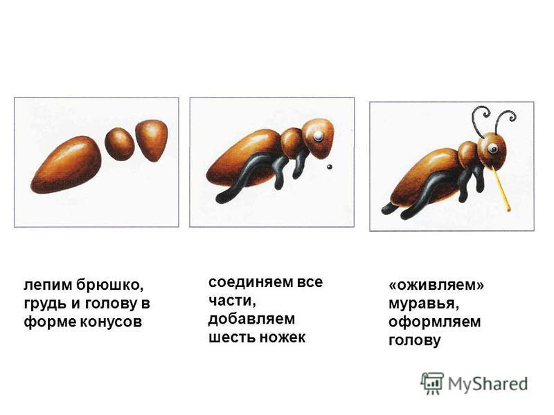 лепим брюшко, грудь и голову в форме конусов соединяем все части, добавляем шесть ножек «оживляем» муравья, оформляем голову